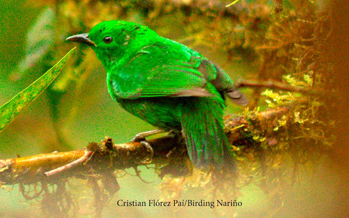 Fotografía por: Cristian Flórez Paí.